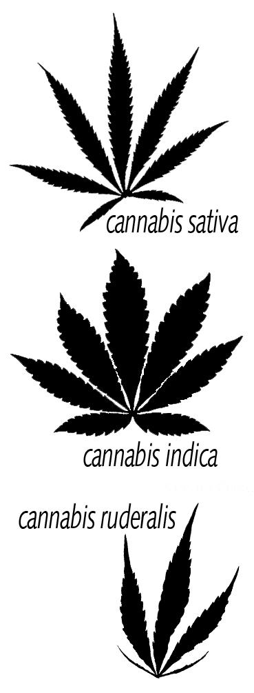 Three types of cannabis