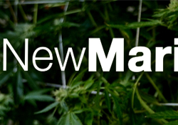 New Marijuana
