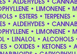 cannabis plant constituents